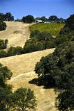 Amador County Vineyard. Vineyard nestled in the hills of Amador County, California Royalty Free Stock Image