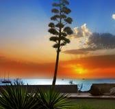 Amadores em Ilhas Canárias de Gran Canaria foto de stock