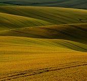 Amadureça a grão em Moravia sul Fotografia de Stock Royalty Free