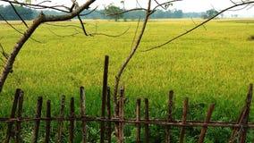 Amadureça recentemente o paddyfield foto de stock royalty free