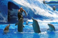Amaestrador con los delfínes - Aqualand Tenerife Imágenes de archivo libres de regalías