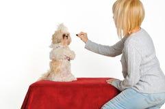 Amaestrador de perro Fotografía de archivo libre de regalías