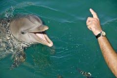 Amaestrador del delfín Fotos de archivo