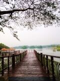 Amaizing everning scenery at wooden bridge in Botanical Garden Putrajaya Malaysia. The famous recreational park in Malaysia