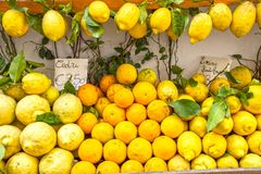 Amalfi cedars and lemons. Amalfi coast`s typical lemons in a market stall royalty free stock photography