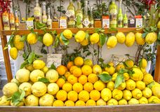 Amalfi cedars and lemons royalty free stock images