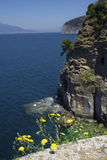 The Amalfi Coast at Sorrento, Campania, Italy. The Mediterranean Sea and yellow flowers along the Amalfi Coast at Sorrento, Campania, Italy. The cliffs of Royalty Free Stock Photos