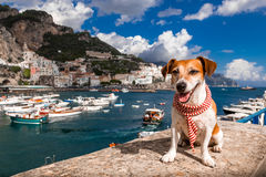 Amalfi dog. Puppy with fashion accessory scarf happily smiling sitting on a pier in the port of Amalfi Royalty Free Stock Images