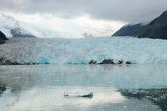 Amalia Glacier Arkivbild