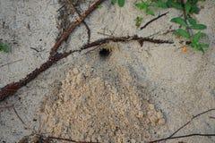 Burrow, den or nesting hole of a Hermit Crab at Tomori Beach at Amami Oshima, Kagoshima, Japa. Amami Oshima, Japan - April 8, 2019: Burrow, den or nesting hole stock photo
