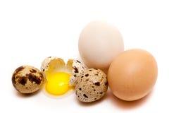 łamana jajeczna przyrodnia przepiórka Obraz Stock