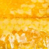 Łamana świeża żółta miód grępla Zdjęcie Stock