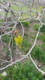 Amande-arbre Images libres de droits