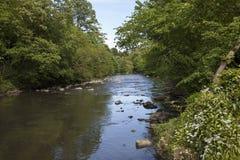 Amande de rivière Image libre de droits