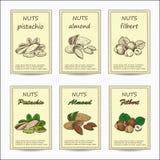Amandel, pistache, hazelnoot Royalty-vrije Stock Afbeeldingen
