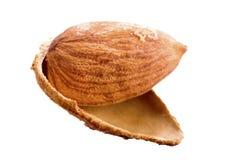 Amandelen in shell Royalty-vrije Stock Afbeeldingen