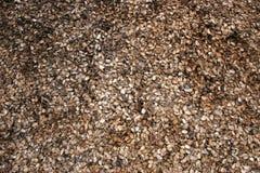 Amandes sèches par texture Image stock