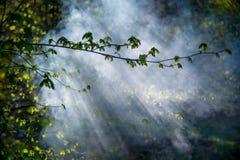 Amanecer brumoso de la primavera imagenes de archivo