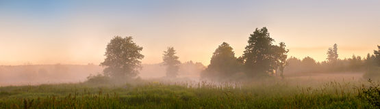 Amanecer brumoso del verano en el pantano Pantano de niebla por la mañana Panora Imagen de archivo