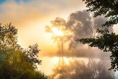 Amanecer brumoso y siluetas de los árboles por un río Imagenes de archivo