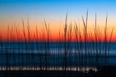 Amanecer de la hierba de la duna Imagen de archivo