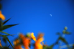Amanecer de la luz de luna por la tarde Foto de archivo libre de regalías