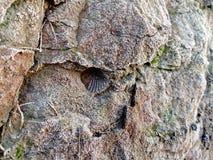 Amanecer de un expediente de Fosil de la almeja fotografía de archivo libre de regalías