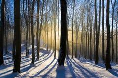 Amanecer del bosque foto de archivo libre de regalías