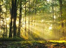 Amanecer del bosque fotografía de archivo
