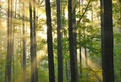 Amanecer del bosque fotos de archivo