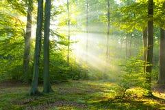 Amanecer del bosque Imagenes de archivo