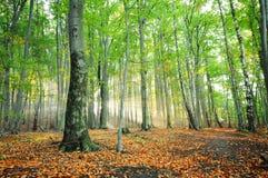 Amanecer del bosque Fotografía de archivo libre de regalías