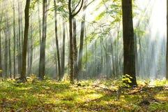 Amanecer del bosque Imagen de archivo libre de regalías