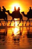 Amanecer del camello Fotografía de archivo libre de regalías