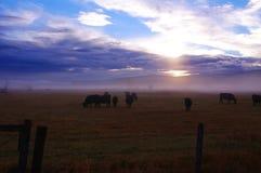 Amanecer del rancho de ganado Foto de archivo libre de regalías