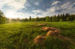 Amanecer del verano en el campo Hay árboles en el fondo En el primero plano heno dispersado Udmurtiya, Rusia foto de archivo