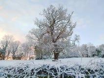 Amanecer detrás del árbol nevoso imagenes de archivo