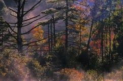 Amanecer en el bosque Foto de archivo libre de regalías