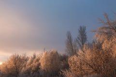 Amanecer en el bosque en invierno Fotografía de archivo libre de regalías