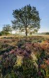Amanecer en el brezo Imagen de archivo