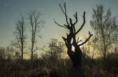 Amanecer en el río del bosque imagen de archivo libre de regalías