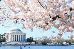 Amanecer en Jefferson Memorial durante Cherry Blossom Festiva Fotos de archivo