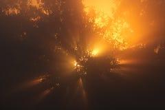 Amanecer en la madera Fotografía de archivo