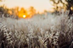 Amanecer en la niebla del bosque Imagen de archivo libre de regalías