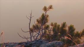 Amanecer en las montañas almacen de video