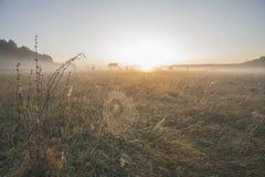 Amanecer, niebla sobre el prado, telarañas de la mañana en el rocío fotografía de archivo