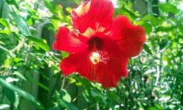Amanecer rojo Foto de archivo