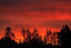 Amanecer rojo sobre bosque Imagen de archivo