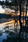 Amanecer sobre el lago con el árbol de la reflexión de la silueta Fotografía de archivo