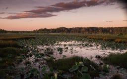 Amanecer sobre un depósito de la naturaleza en Australia Foto de archivo libre de regalías